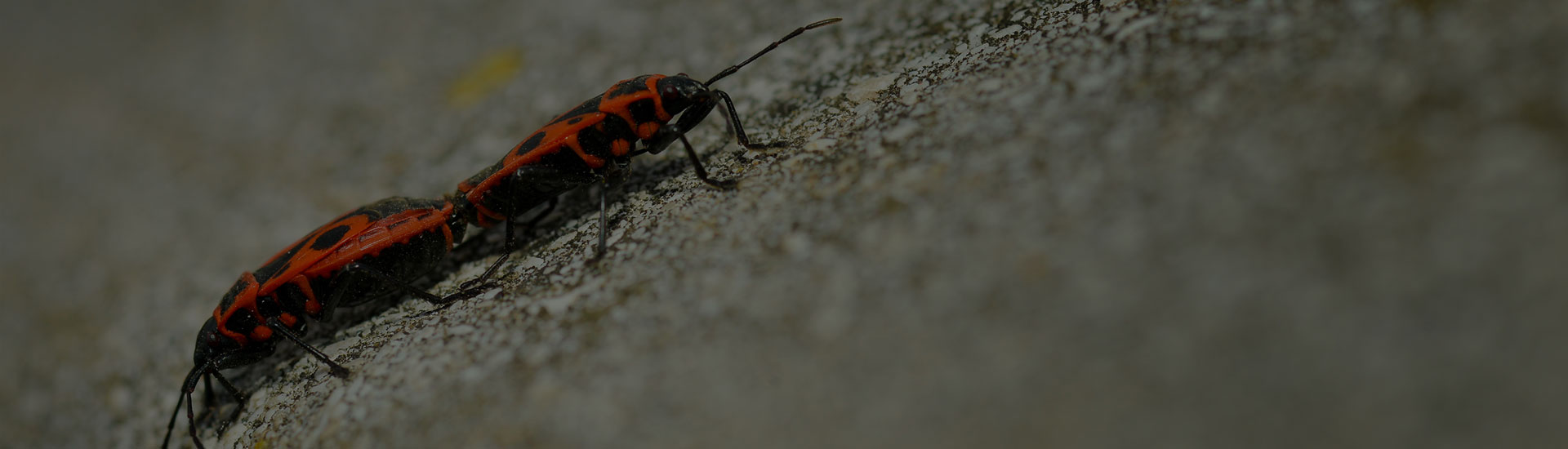 Keep your home bug free!
