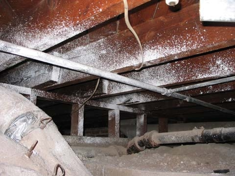 white-mold-in-crawl-space